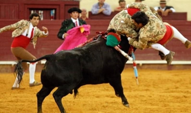 Campo Pequeno, The Portuguese bullfight is a truly unique experience